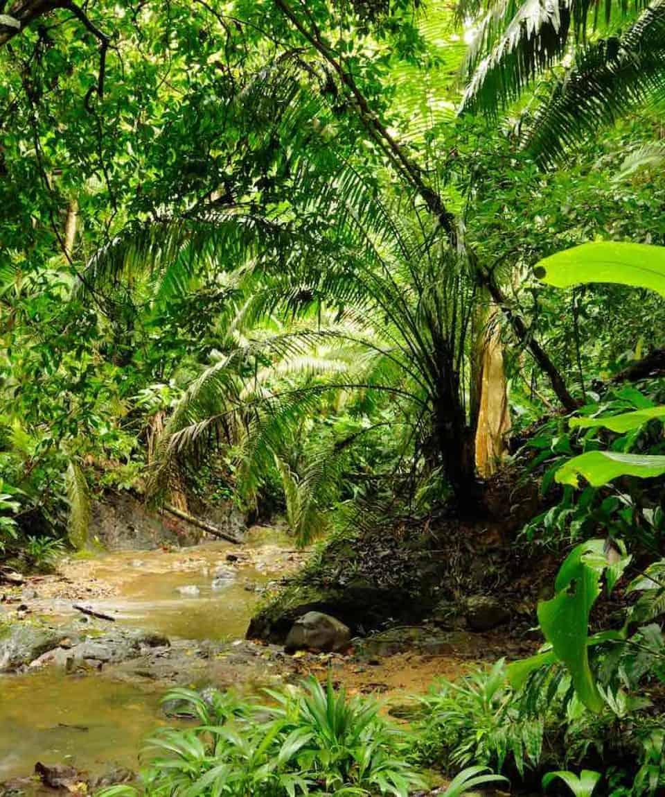 True Jungle