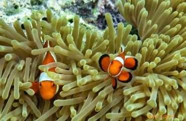 Where's Nemo?