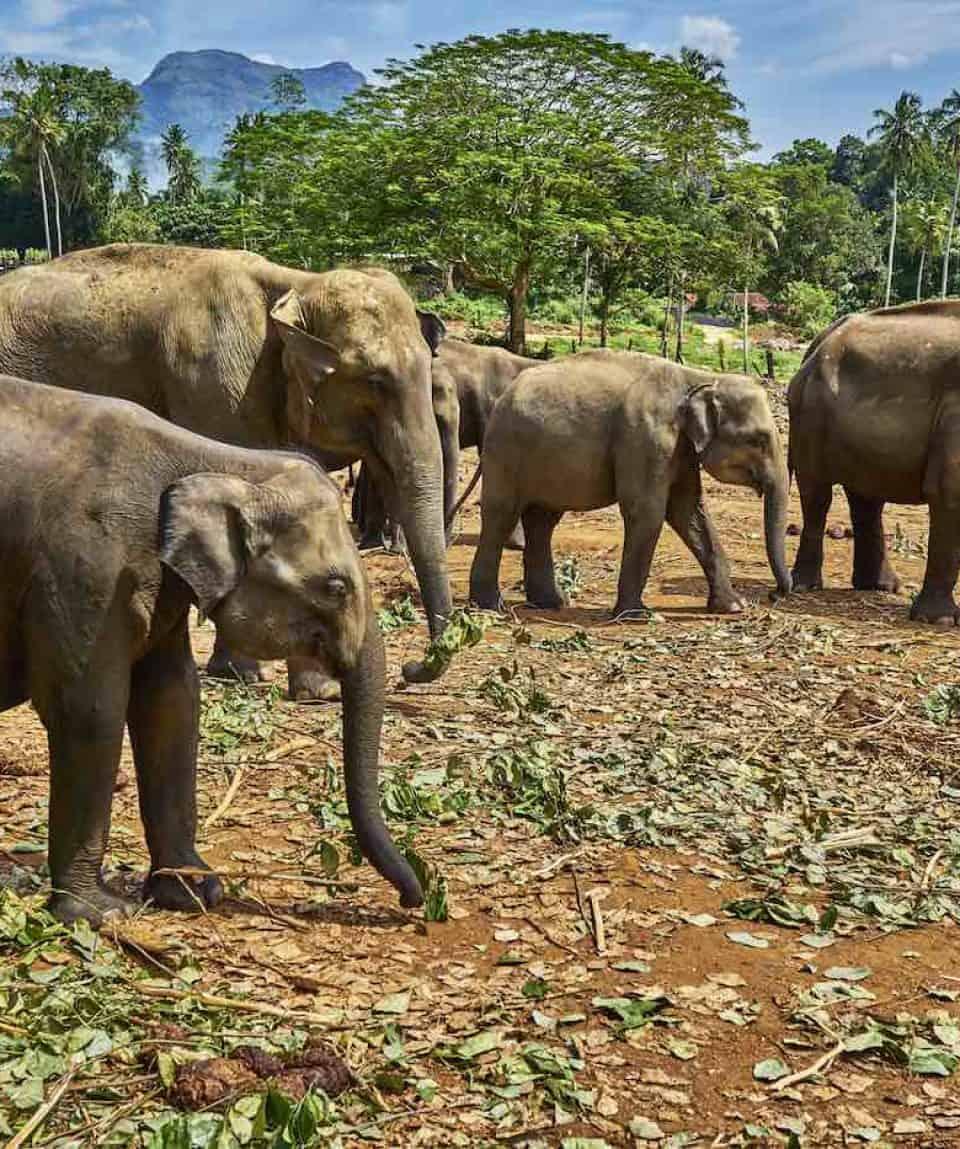 Bike Tour Sri Lanka