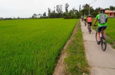 By Rice Fields