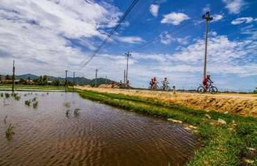 Cycling by Rice Fields