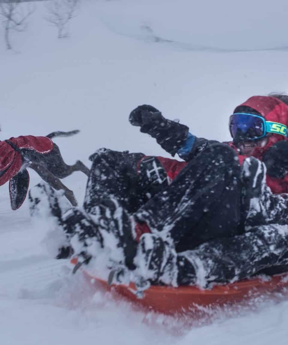 Arctic Fun