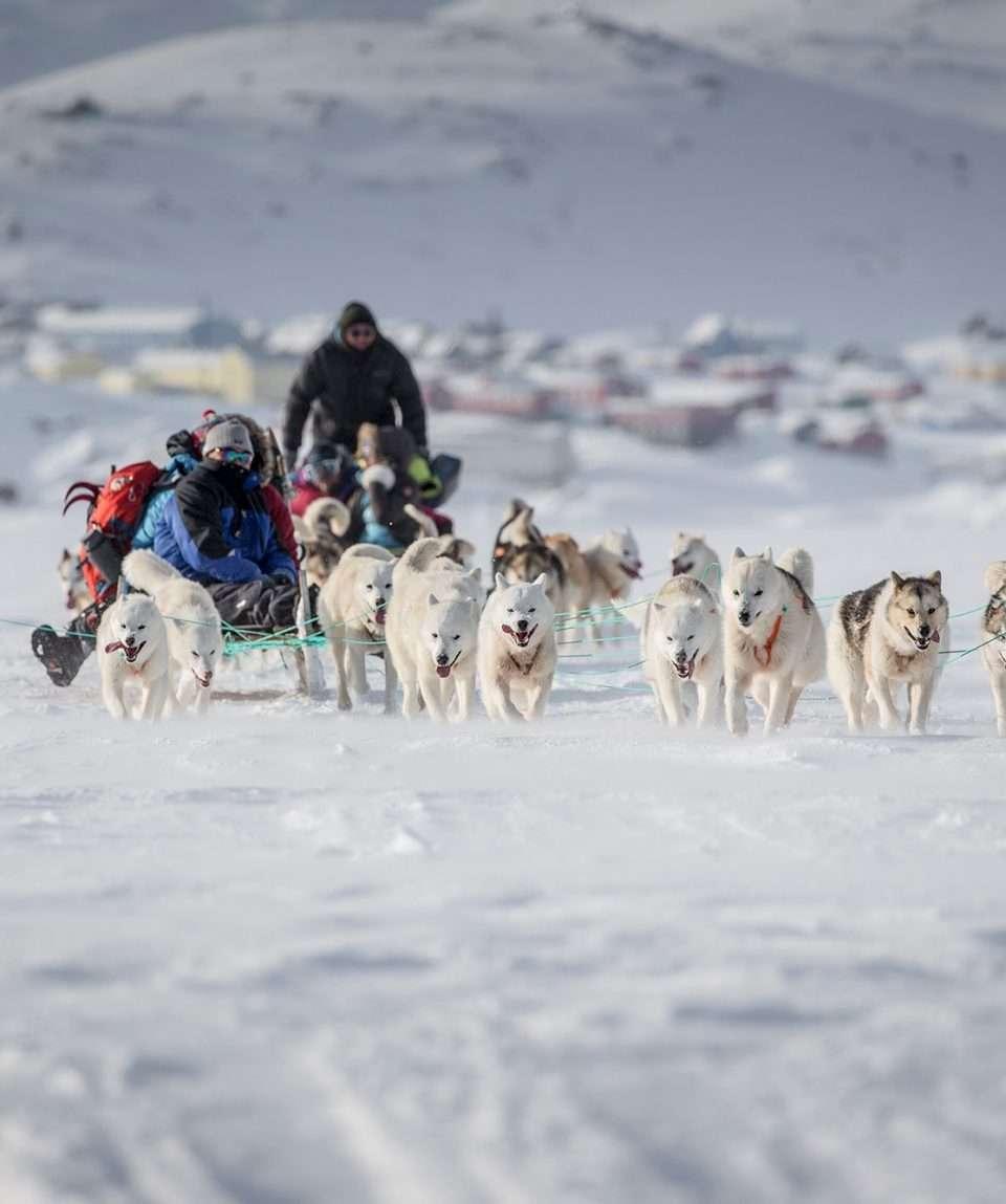 Dog Sledding Greenland